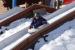 art-21-ski-lesyin-2014-051